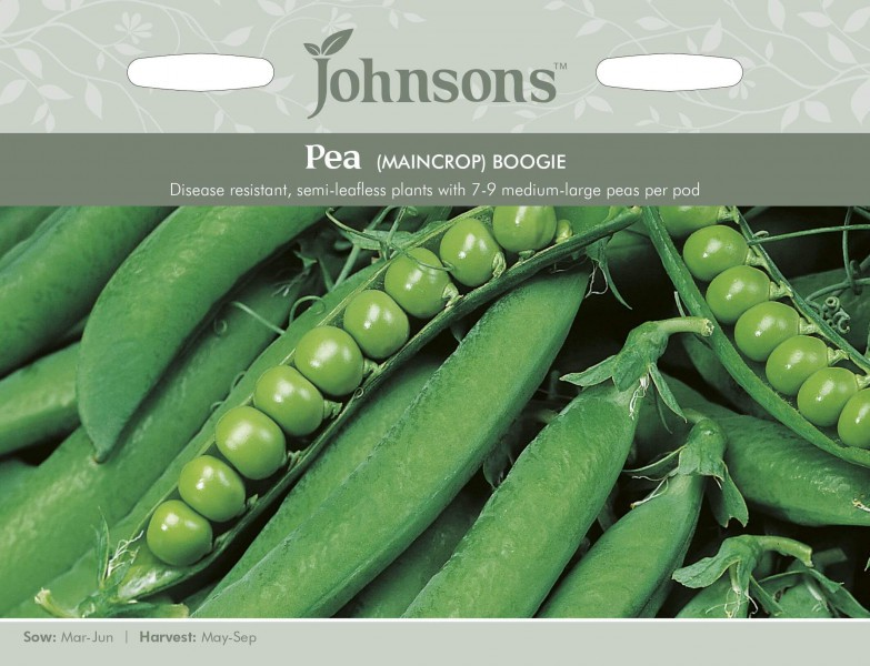 192809 SEED PEA BOOGIE