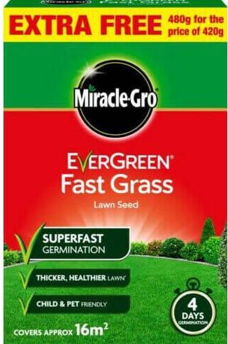 184846 EVERGREEN FAST GRASS